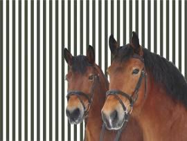 Tischset zwei Pferdefreunde (2-er Set)